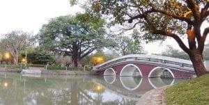 台中公园4